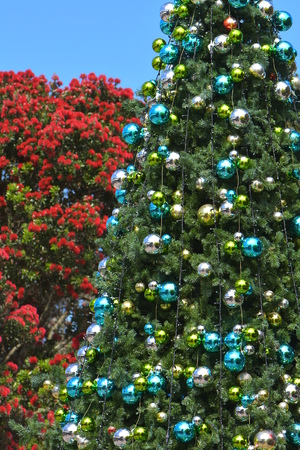 New Zealand Christmas represented by both traditional decorated conifer tree and native Pohutukawa Metrosideros excelsa blooming in festive colors. Archivio Fotografico