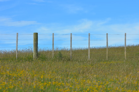 Paddock wire fence supported by wooden poles and slats on pasture covered with grass and yellow flowers. Stock Photo