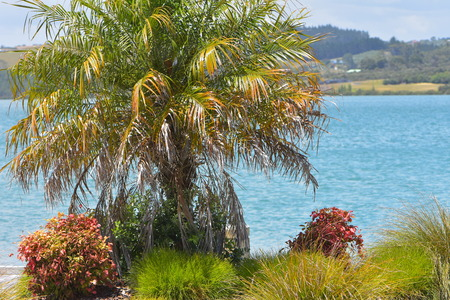 Small palm tree among other colorful plants close to shore with calm harbor in background.