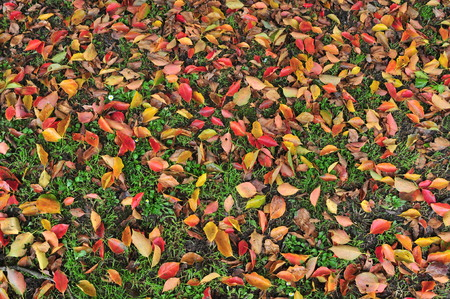 Leaves of various bright colors on ground among green grass in autumn.