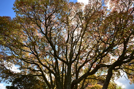 Wide angle view of extensive treetop with multiple thick and thin branches with multitude of colorful leaves.
