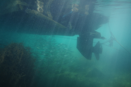 School of silver jack mackerel hiding in shade under motor boat hull anchored in shallow water close to shore. Engine propeller is clearly visible in murky water. 스톡 콘텐츠
