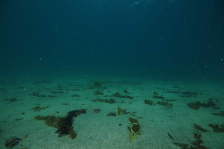 Flat sandy bottom underwater with scattered seaweeds remains.
