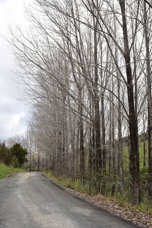 Countryside road along trees without leaves behind wire livestock fence on cold overcast day.