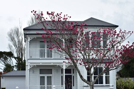 Classic white two-story wooden villa with tree with saturated pink flowers in front of it. 写真素材