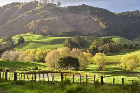 Farmland with fresh green grass with hills cleaned of forest in background in Mahurangi West near Auckland in New Zealand.