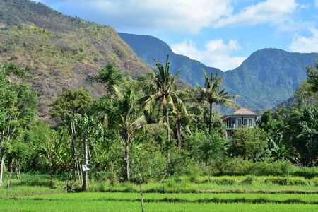 Farmland with tropical vegetation and steep volcanic hills in background in eastern Bali. Stock fotó