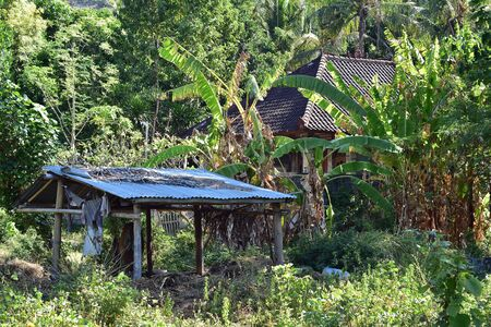 Farm cow shelter made of bamboo poles with corrugated metal roof among tropical vegetation with prevailing banana plants in eastern Bali.