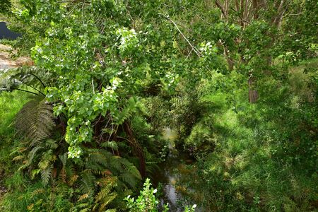 Little creek with reflecting water surface hidden among fresh green trees and ferns.