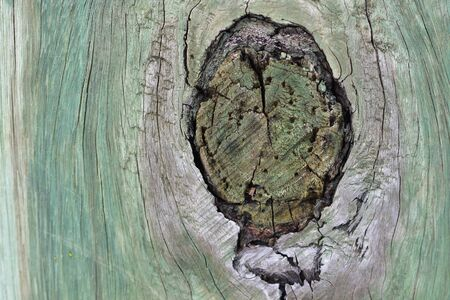 Dark knot in weathered wooden pole tinted in green from treatment against rot.