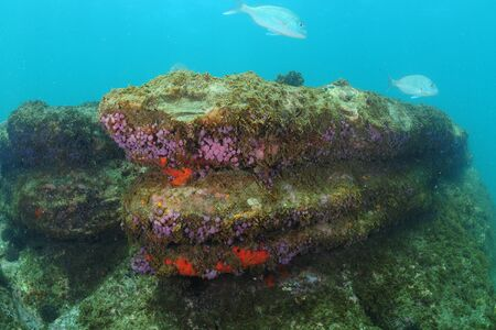Underwater rock covered with colorful invertebrates.