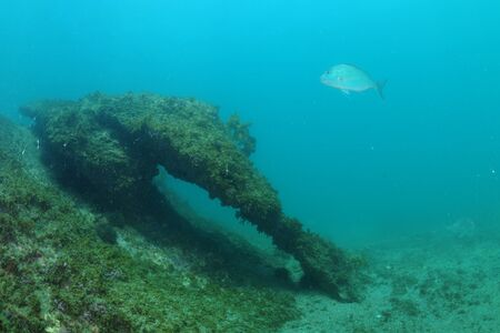 Rock of interesting shape appeared in distance with Australasian snapper hovering above it.