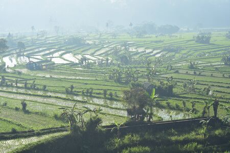 Terraced rice fields disappearing in morning mist.