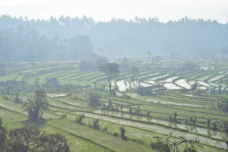 Terraced rice fields disappearing in morning mist with tropical forest in background. Imagens
