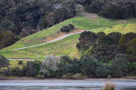 Steep slope of farmland land with areas of soil erosion and coastal vegetation.