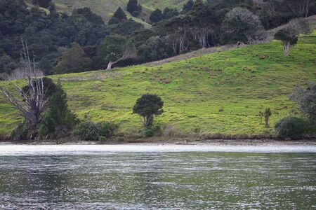 Pastures and native vegetation on farmland hills next to bank of tidal river. Imagens