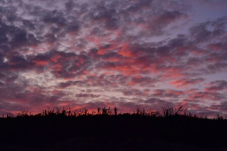 Dense pink to purple clouds in dark evening sky after sunset. 写真素材