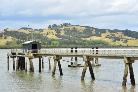 Concrete jetty with posts covered with oyster shells reaching high tide mark standing in muddy coastal waters of Hokianga Harbour.