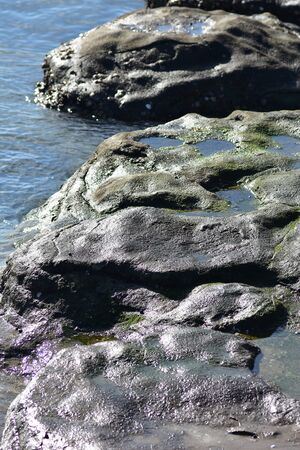 Smooth coastal rocks at low tide with wet shiny surface and small pools full of green algae.