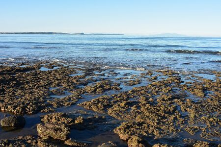Low angle view of flat coast rocks covered with short brown algae with calm ocean in background.
