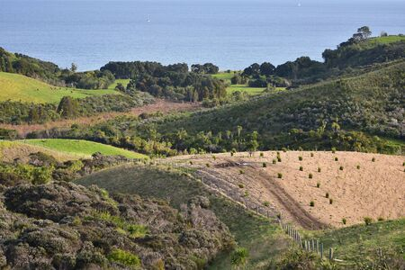 Hills with farmland and recovering native bush in Shakespear Regional Park on Whangaparaoa Peninsula near Auckland.