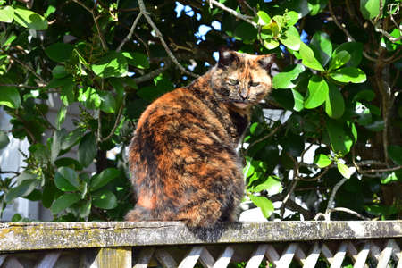 Cat with ginger brown pattern sitting on weathered wooden fence under tree in bright light.