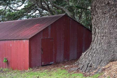 Vintage red corrugated metal shed or barn under massive pine tree. 免版税图像