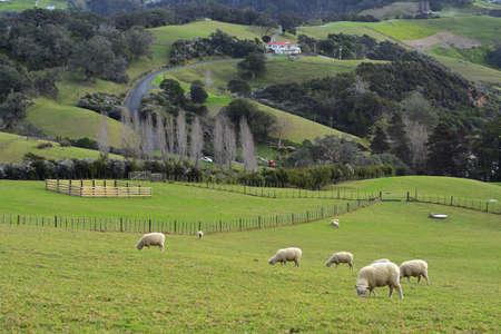 Hills of Mahurangi East in Scandrett Regional Park covered with green pastures and patches of recovering native bush.