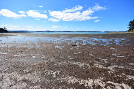 Very shallow flat sandy bay with sea grass rotting in bright sun during period of low tide. 版權商用圖片