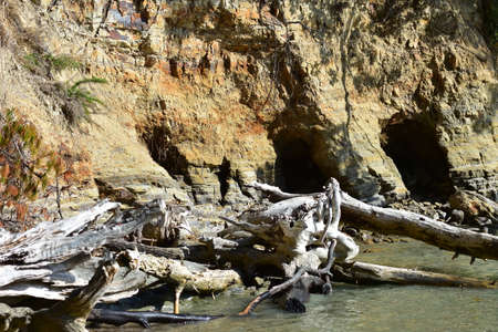Eroding clay sea shore with numerous caverns and weathered tree trunks stranded in shallows.