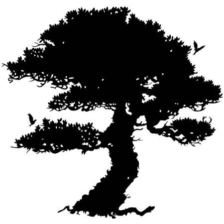 beech: black tree