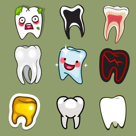 zuby: lidské zuby