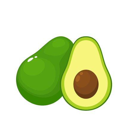 Avocado on a white Background. Isolated Vector Illustration