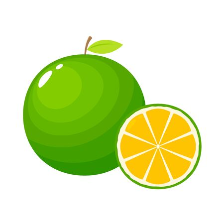 Lime fruit illustration with a cut. Isolated Vector Illustration