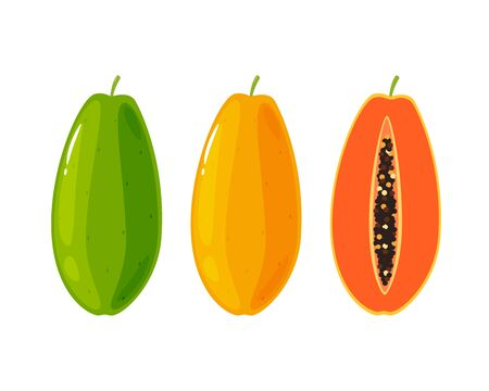 Anatomy of Papaya fruit. Vector Illustration 向量圖像