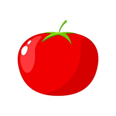 Red Tomato on white Background. Isolated Vector Illustration