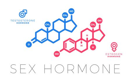 Testosterone and Estrogen, sex hormone molecule. Isolated Vector Illustration 向量圖像