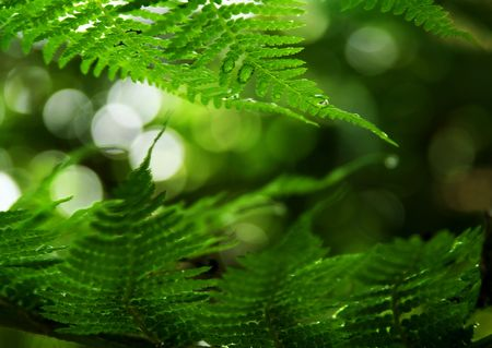 ferns caught in a breeze - slight motion blur on lower leaves shot with a short depth of field