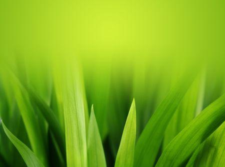 soft green grass reaching toward the sunlight
