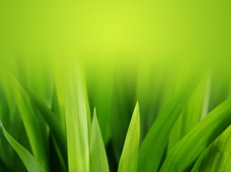 soft green grass reaching toward the sunlight