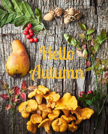 Hello autumn frame from fall pear, mushrooms, berries, nuts and leaves on old wooden background, flat lay, from above top view, copy empty space