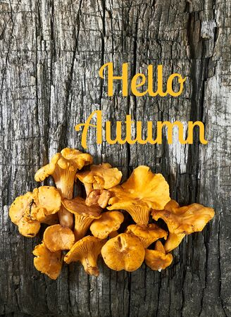 Hello autumn and pile of chanterelles on old wooden background, vertical, copy empty space, flat lay, from above top view, closeup