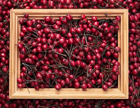 Abstract autumn flat frame composition from red berries of haw thorn, closeup, from above view, autumnal design and decor concept