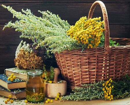 Fresh and dried wild herbs: absinth wormwood plant, tansy, dried St. John's wort, clover and mifoil, assorted on the wooden rustic table, closeup, copy space, alternative medicine and naturopathy