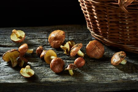 Boletus mushrooms spilled out near wattled basket on old rustic wooden table, backlit, closeup, copy space, autumn season eating or natural healthy food concept