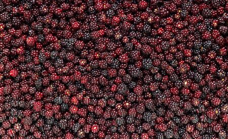 Blackberries textured flat background, forest wild berry laying flat, overhead top view from above, backdrop for your design, storing healthy vitamin harvest concept