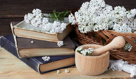 Yarrow wild field herb on old books with fresh milfoil flowers and mortar nearby on rustic table on wooden background, closeup, copy space, alternative medicine and naturopathy concept Standard-Bild