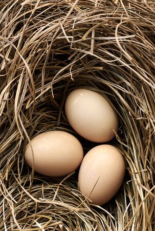 Hen eggs in the nest made of dry grass and straw, flat lay, from above overhead top view, closeup, macro, agriculture and homegrown organic food concept Standard-Bild