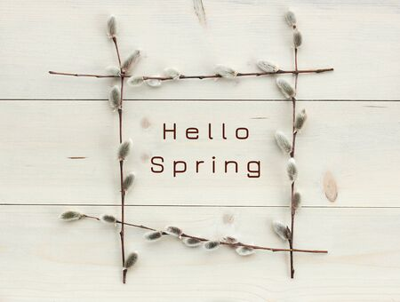 Hello spring in floral frame from pussy-willow branches flat on white wood, minimalism monochrome composition, empty space for your design, closeup, palm sunday, easter and mothers day holidays concept