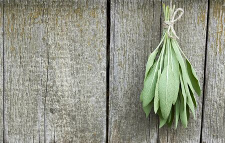 Sage tuft hanging under the roof and drying on the background of old textured wooden wall, closeup, copy space, agriculture and aroma herbs concept Standard-Bild
